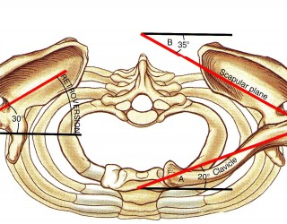 Figura 1 Vista dall'alto di entrambe le spalle in posizione anatomica Neumann D.A. Kinesiology of the musculoskeletal system
